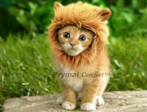 Prymal Lion Mane Dog Cat Costume. This Pet Costume Turns Your Cat or Small Dog Into a Ferocious Lion King! (Please be aware of fake products from other sellers).Clothing for the Kitty.