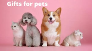 Gift Ideas For Pets & Pet Owners