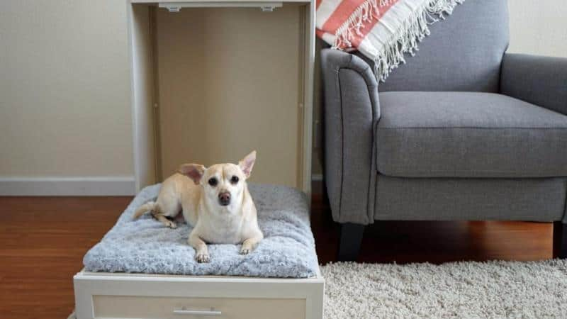 Murphy Style Dog Bed – Gift For Pet Owners
