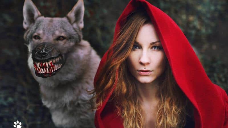 Werewolf Dog Muzzle – Gift For Large Dog Owners