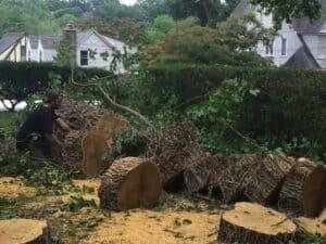 Tree Company Bronx - Tree Removal & Cutting Service