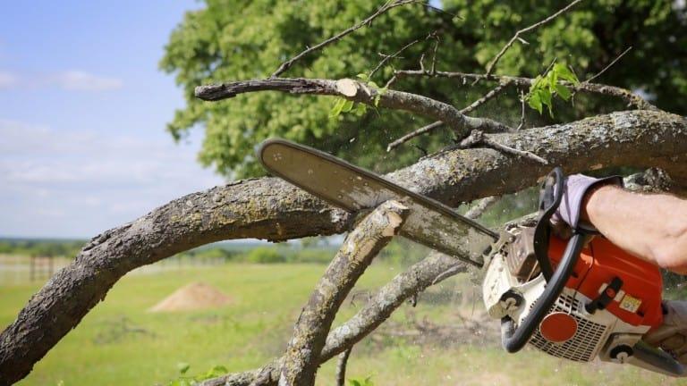 tree service 768x432