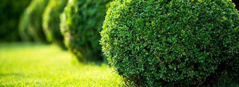 pruning and trimming shrubs and hedges 1 768x279